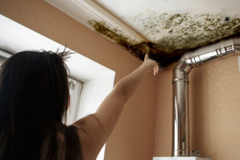 mold removal in los angeles
